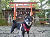吉祥寺のパワースポット  武蔵野八幡宮