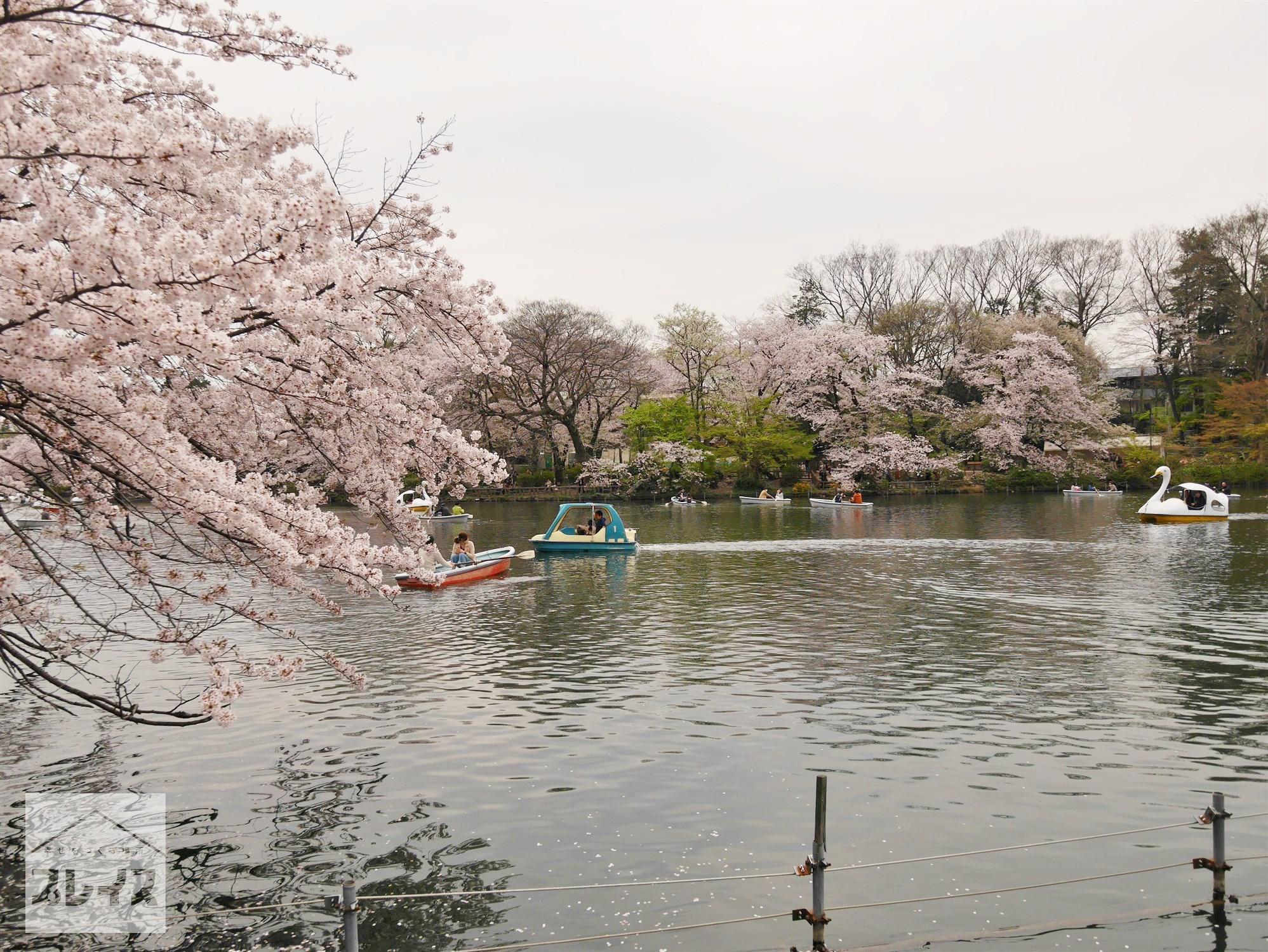 LA20170410-井の頭恩賜公園 (9)池と桜.jpg